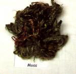 moss1_small1